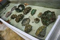 Giant Clams Exhibition Tank