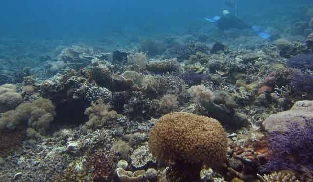 Kapikan Reef
